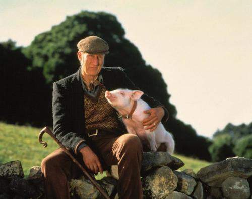Çiftçi Arthur H. Hoggett'i canlandıran James Cromwell'in bu dans sahnesi için bile keyifle yeniden izlenebilir.